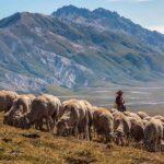 pastore-campoimperatore